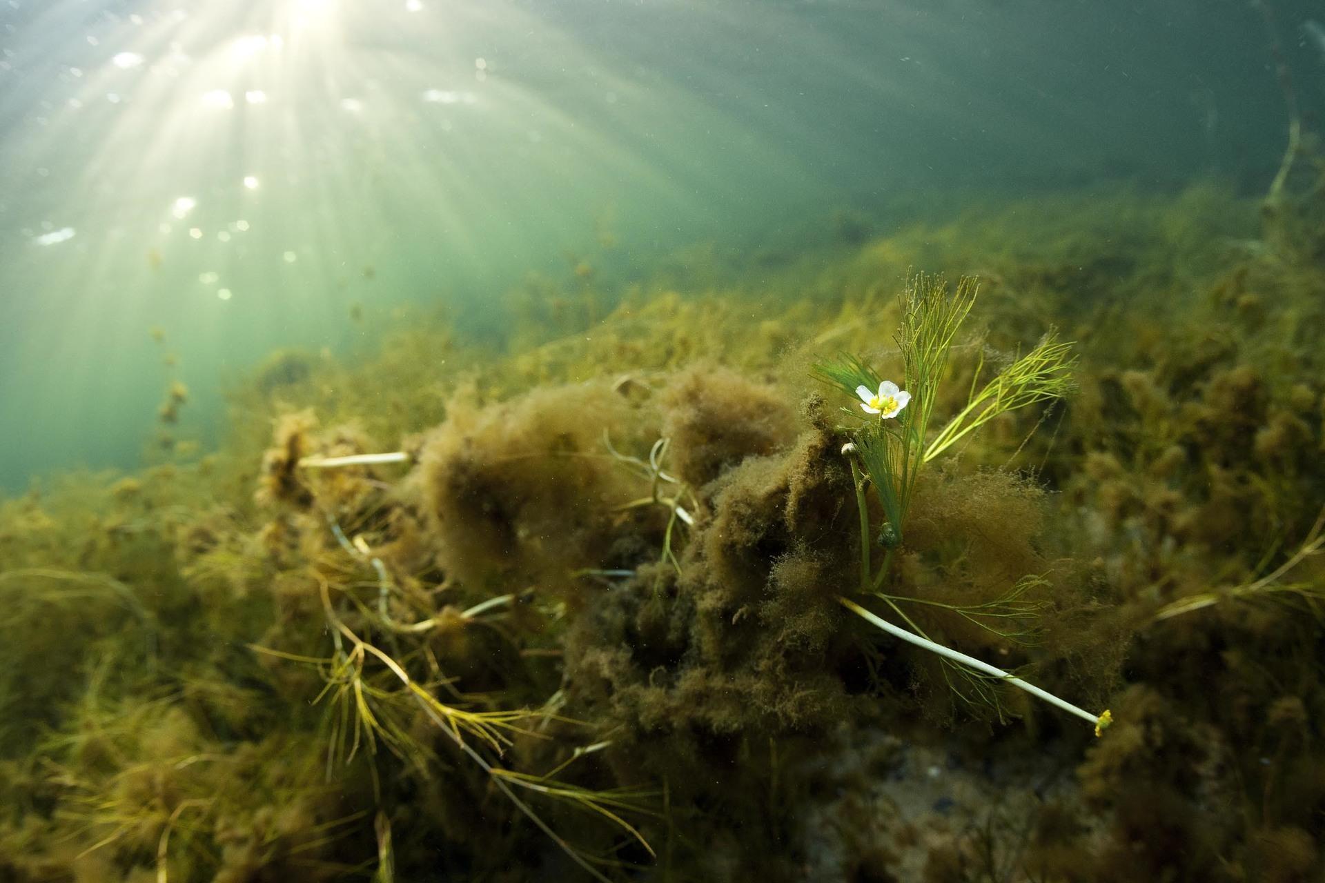 Puhdas Itämeri -hankkeet toimivat määrätietoisesti, lopullisena tavoitteenaan tehdä oma työmme tarpeettomaksi Itämeren suojelussa.