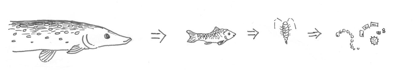 Rovfisk reglerar näringscirkulationen