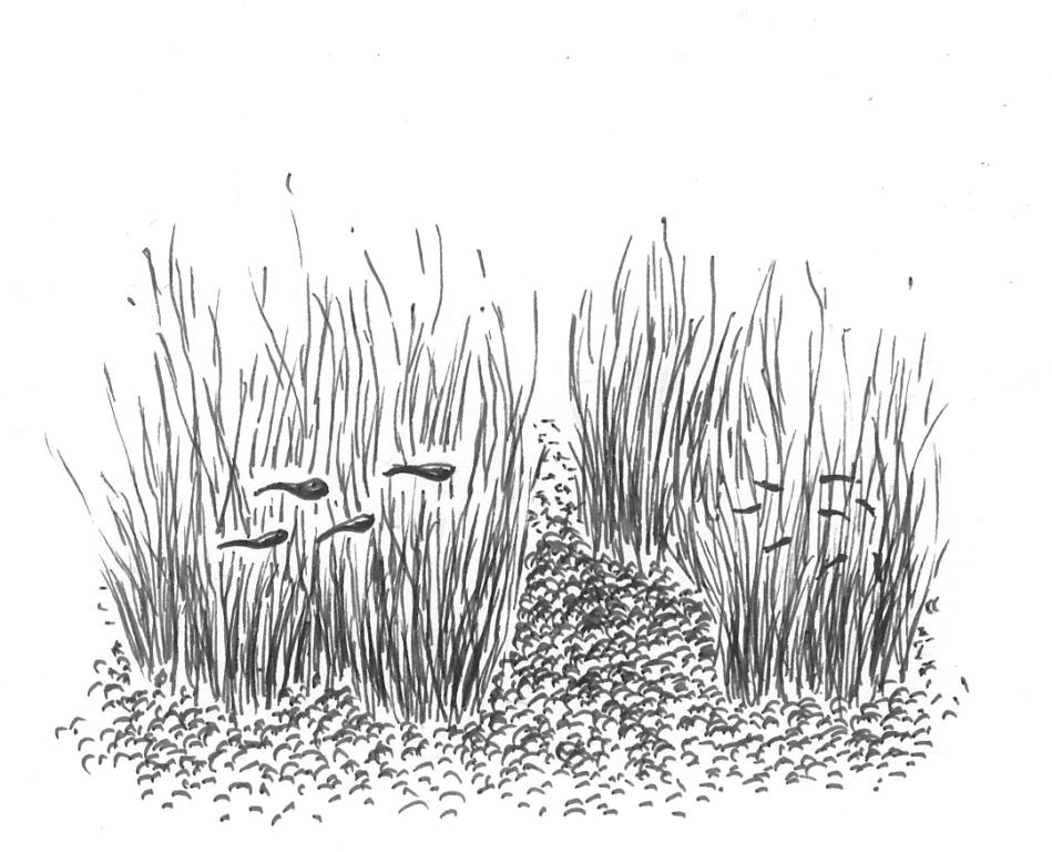 Kalanpoikaset kosteikon suojassa